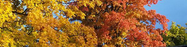 fall-tree2_horixcrop_KM