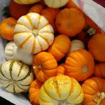 a bag of small pumpkins and squash