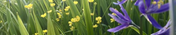 close up picture of grass with yellow and purple flowers.