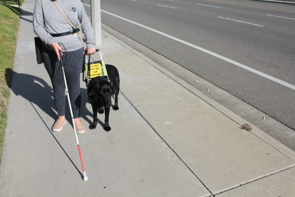 Woman and service dog walking down the side walk. She is also using a cane.